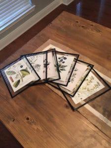 DIY Framed Botanical Prints with Free Botanical Printables