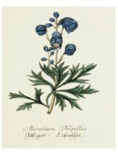 DIY Botanical prints