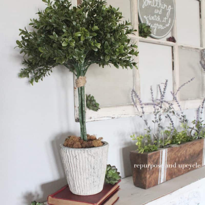 DIY Topiary Trees with Boxwood Sprays