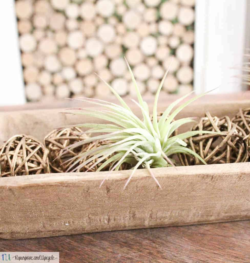 air plant decor