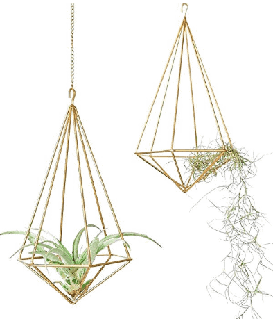 hanging air plant decor