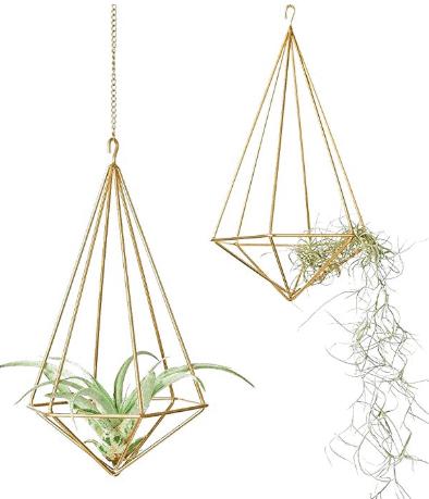hanging air plant decor