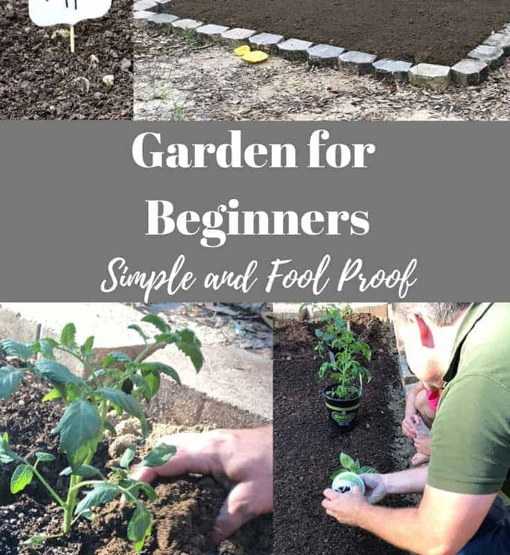 garden for beginners