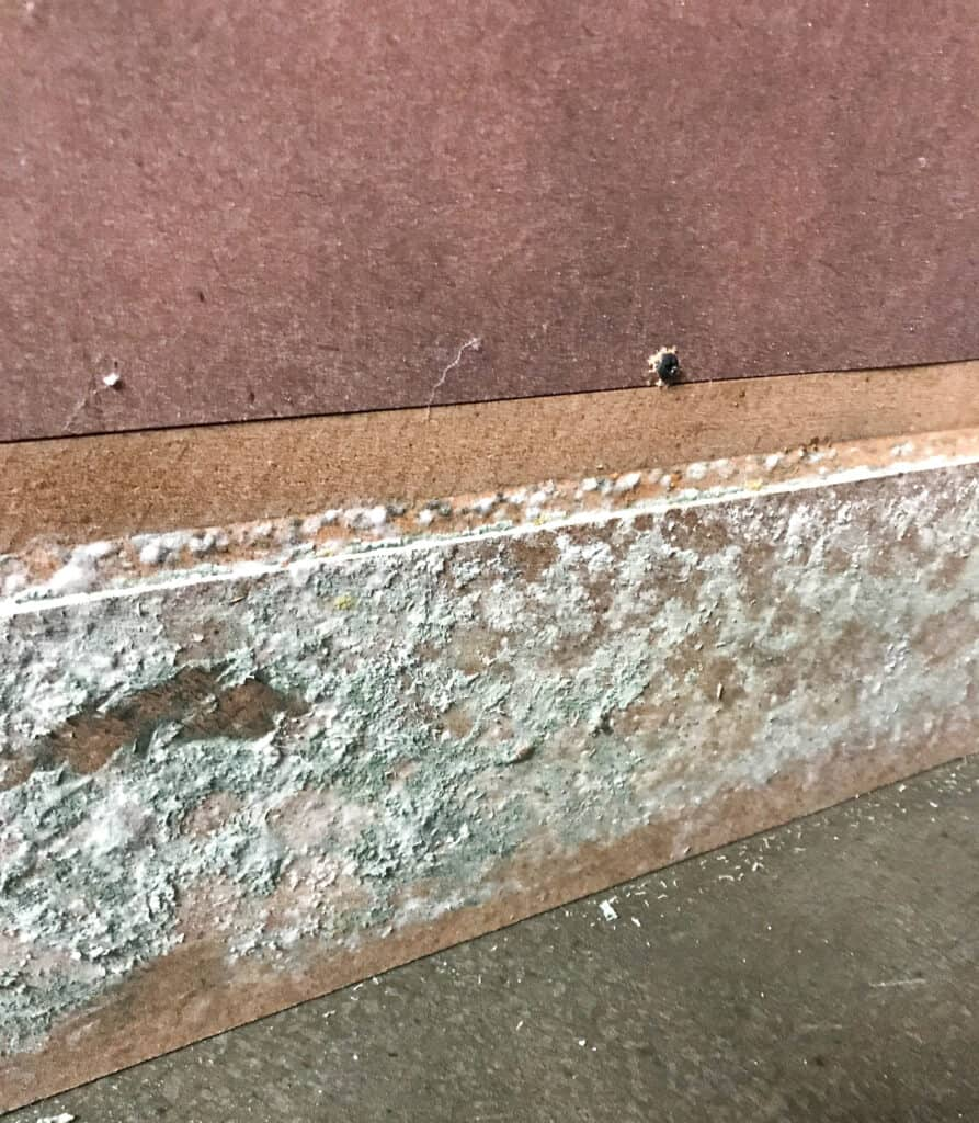 mold on particle board furniture