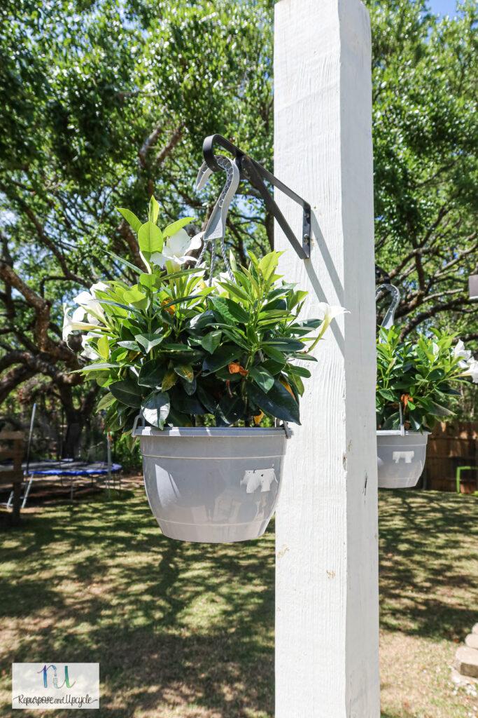 plastic hanging planters